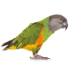 για παπαγάλους