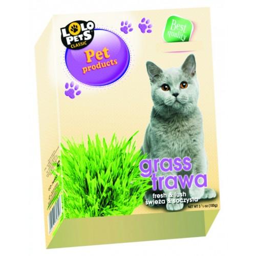 Χόρτο Γάτας LOLO